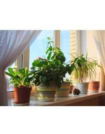 Get Best Offers On Indoor Plants For Gifting